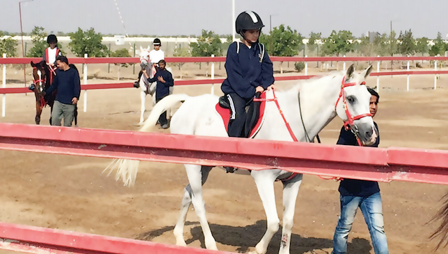 Working in tandem: The club is home to 15 horses for beginners.