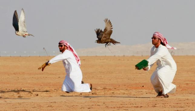 Abu Dhabi Falconry Competitions sets sights on going ...